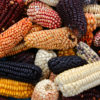 Mix,Of,Peruvian,Native,Variety,Of,Heirloom,Corns,From,Local